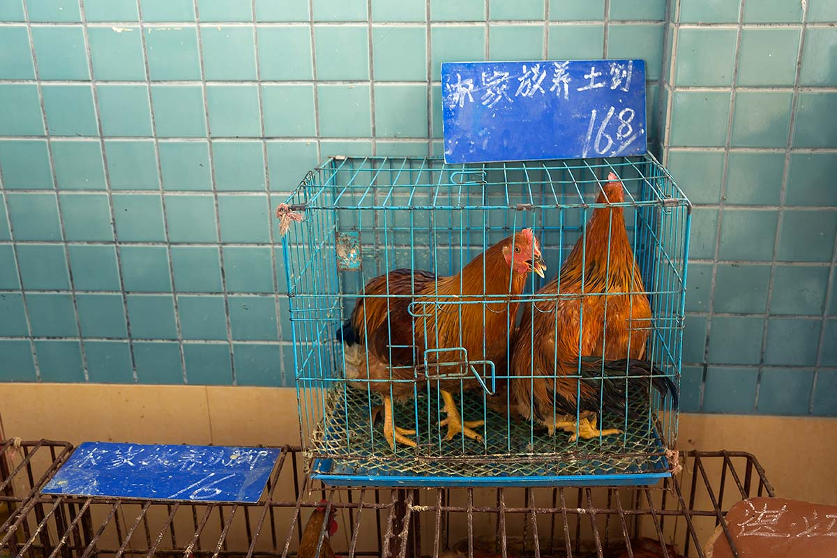 Two cages roosters at Huayuan market in Guangzhou.