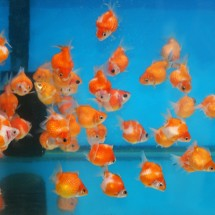 goldfish-street-hong-hong