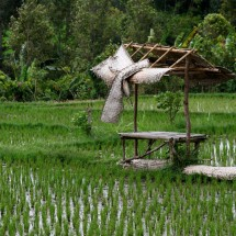 rice-field-bali-indonesia