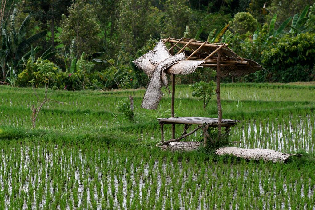 Bali rice terraces.