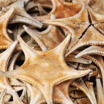 seastars-market-guangzhou-china