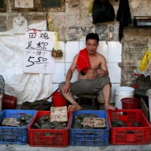 turtle-seller-guangzhou-china-market