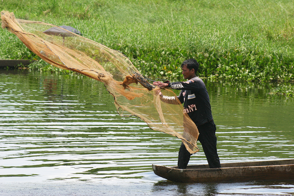 "Lake Loktak is also a source of livelihood for the rural fisherman who live in the surrounding areas and on phumdis, also known as ""phumshongs""."