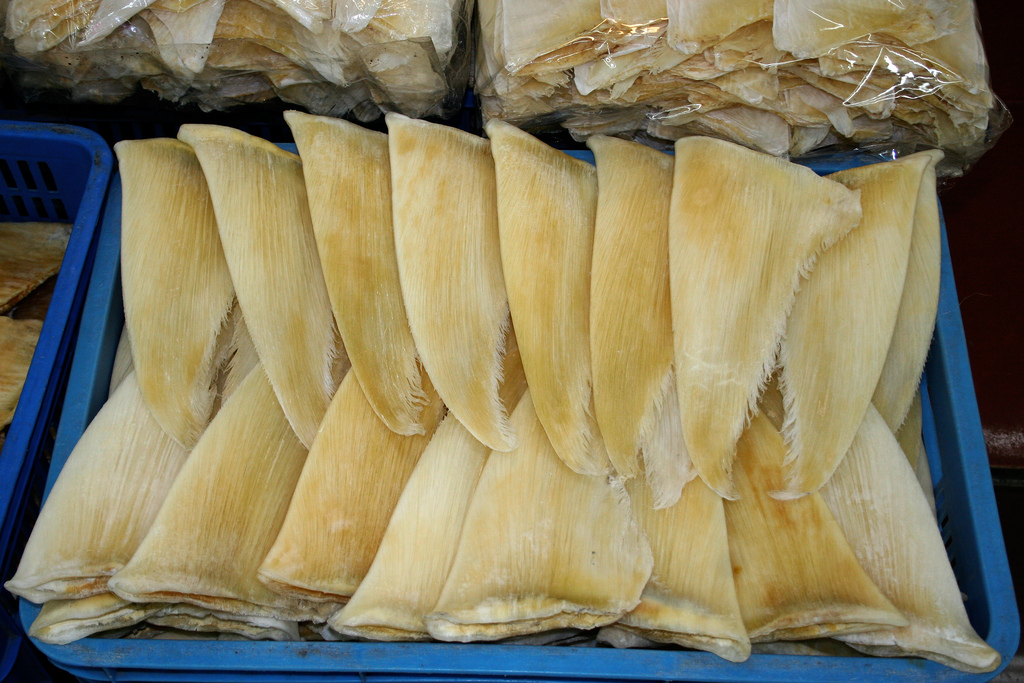 Dried shark fins at a market in Guangzhou, China.