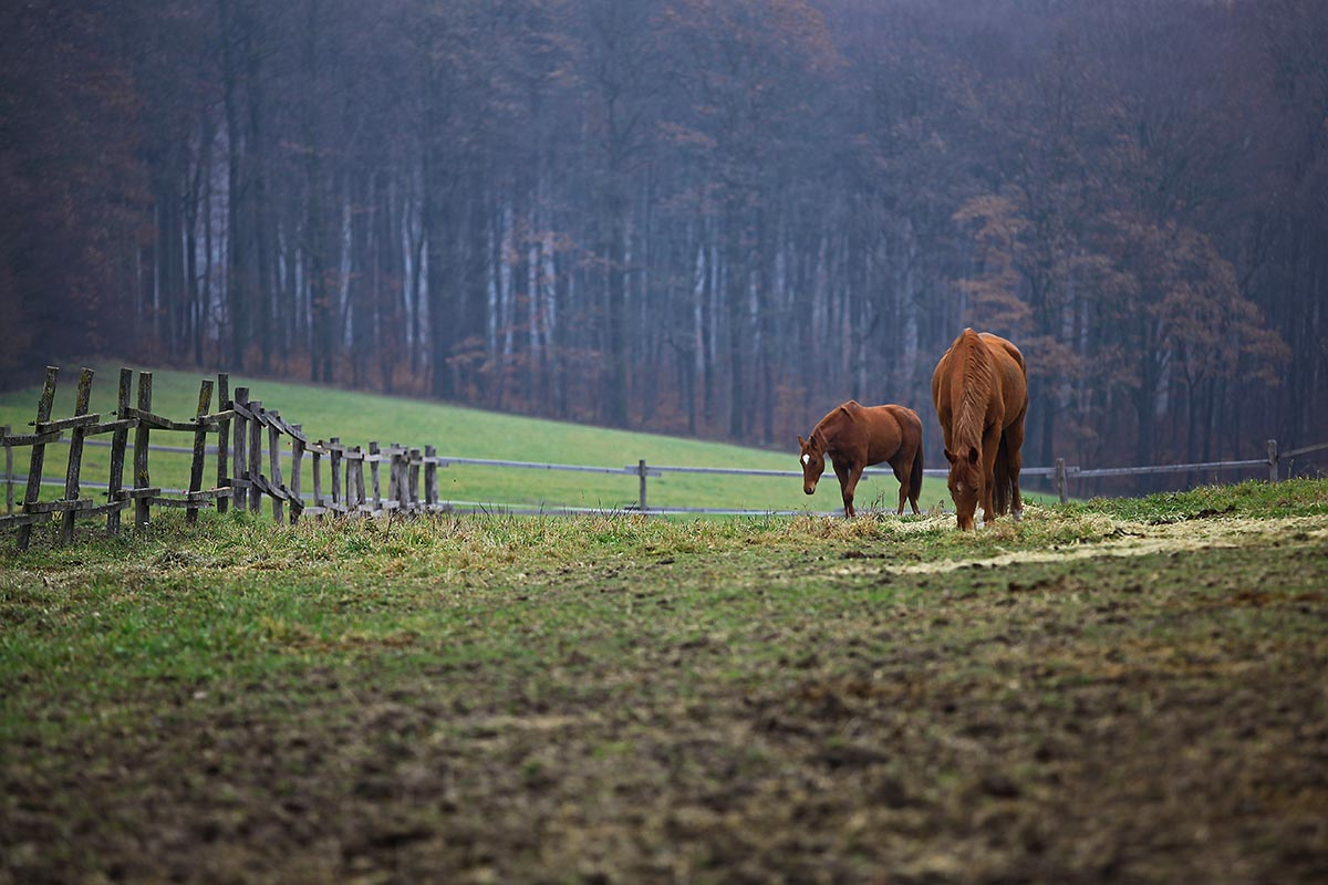 Horses enjoy the rich fields around the Vienna Woods.