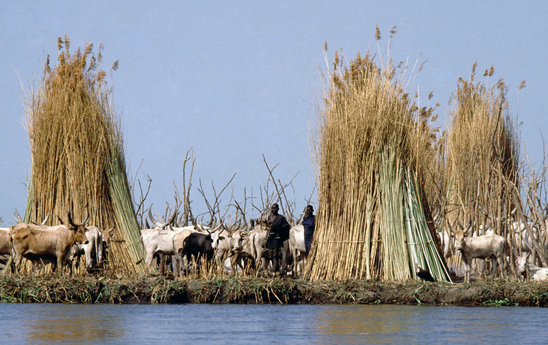 The Nuer and their cattle in southern Sudan. Photo credit © Ngari - Norway / flickr.