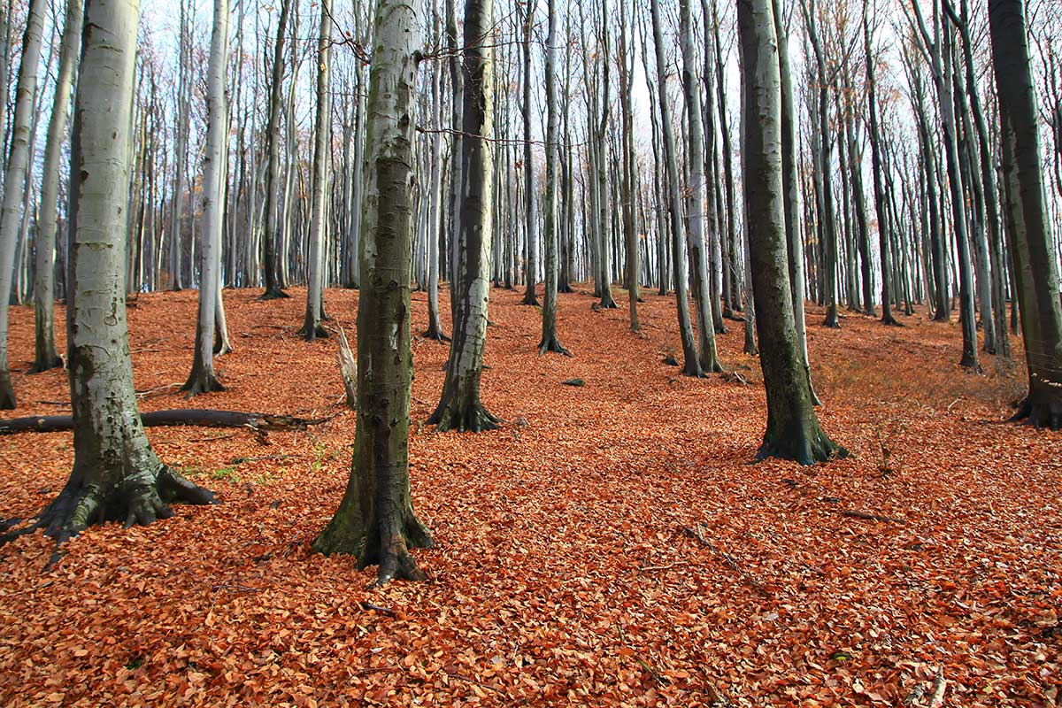 The Vienna Woods are a 45 km long and approx. 30 km wide range of hills and a popular recreation area for the Viennese.