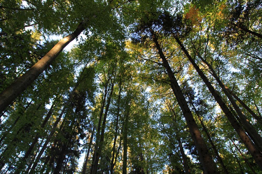 Huge trees...
