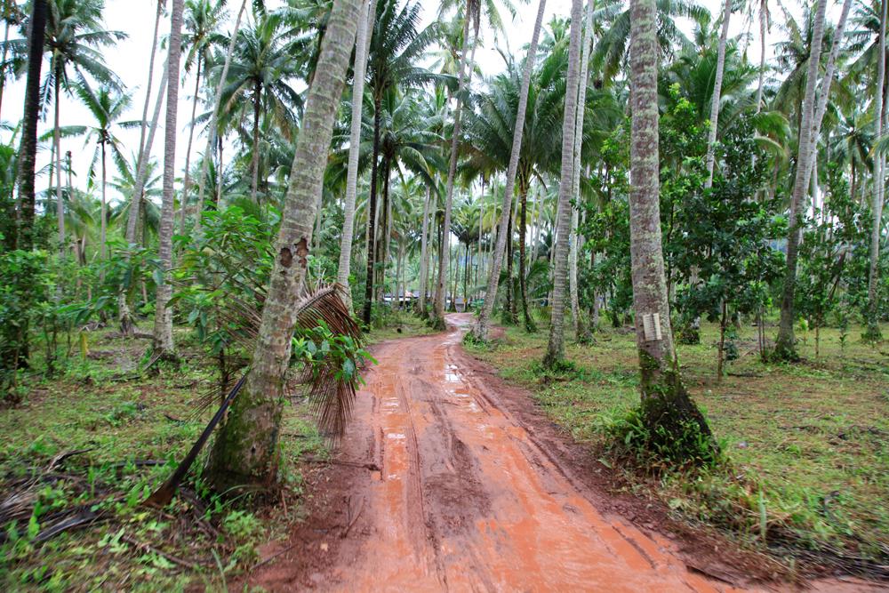 Walking through the palm tree plantation on Koh Kood island.