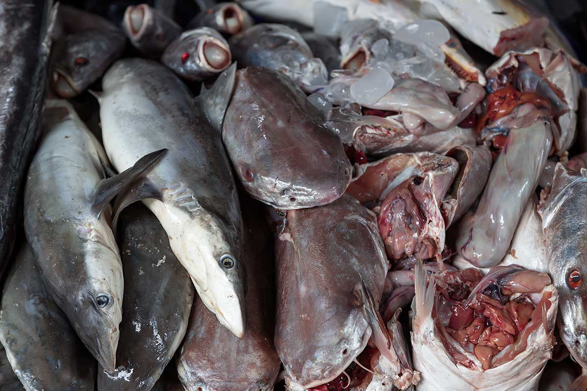 Fresh fish can be found all over Mahachai market, this unfortunately also includes sharks & shark fins.