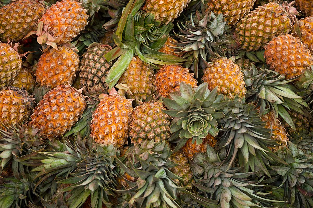You can buy as many truck-loads of pineapples as you want at Saphan Khao fruit market.