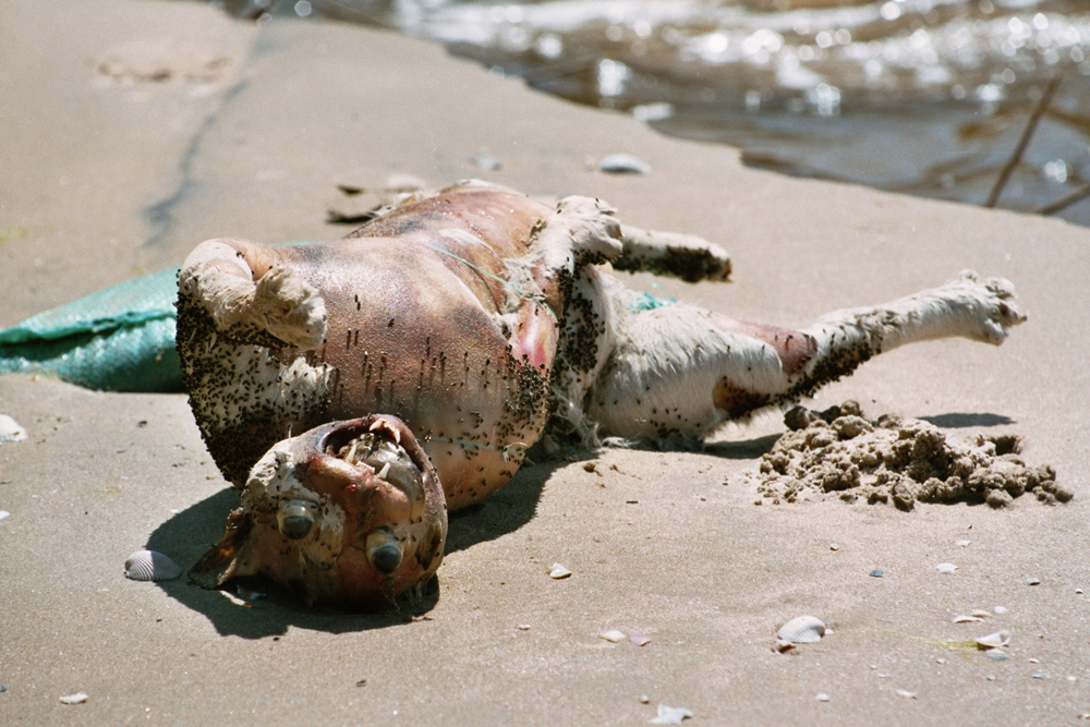 Not at a market but it fits here: Dead cat at a beach in Vietnam.