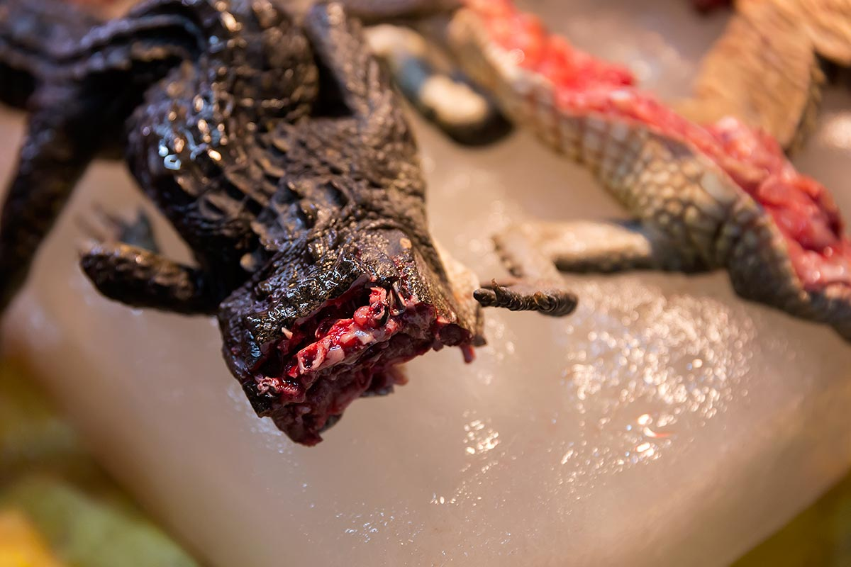The crocodile's head is usually cut off at wet markets in Guangzhou.
