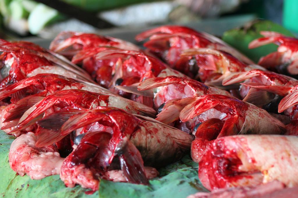 Dead fish at a market in Kuala Lumpur, Malaysia.