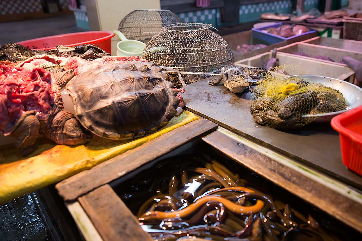 Turtles, crocodiles, snakes - nothing special at Huayuan market in Guangzhou.