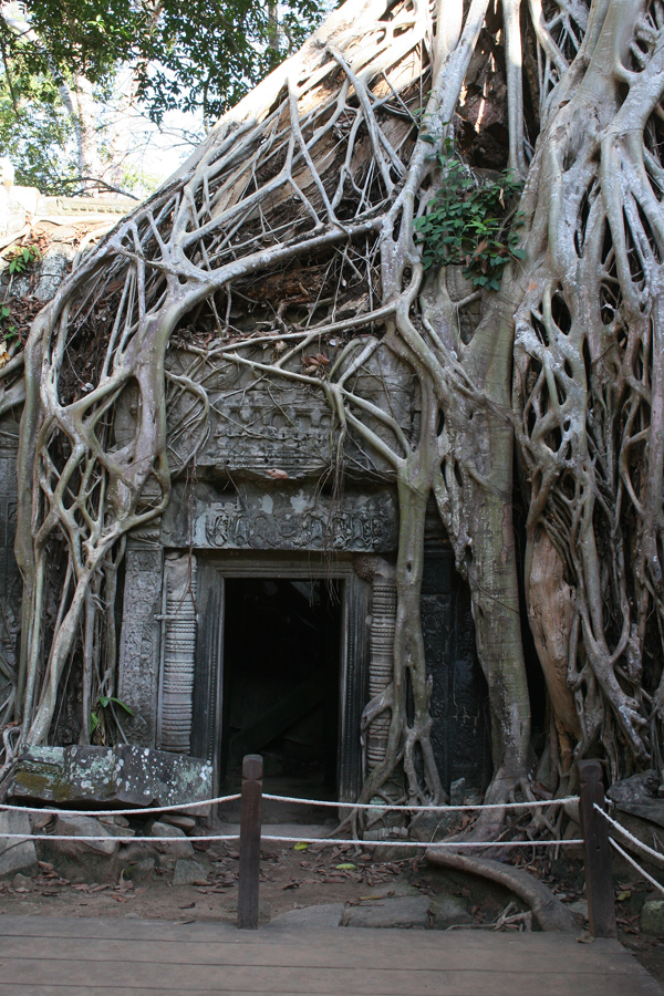 Ta Prohm temple in 2010.