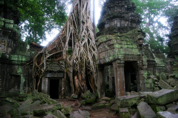 The world famous Ta Prohm temple.