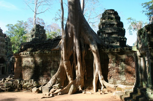 The jungle is taking over at Angkor Wat.