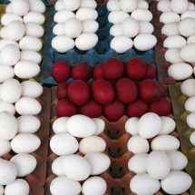 colored-eggs-manila-philippines