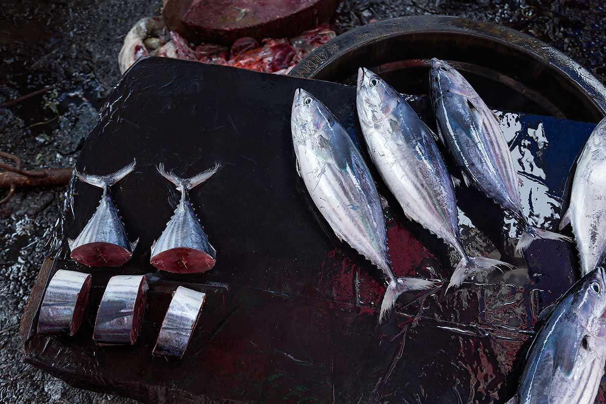 Fish is a staple food across the entire country. Fresh tuna can be bought at almost every local market in Sumatra. Sever hundred kilos of tuna are sold at the wet market in Padang every day.