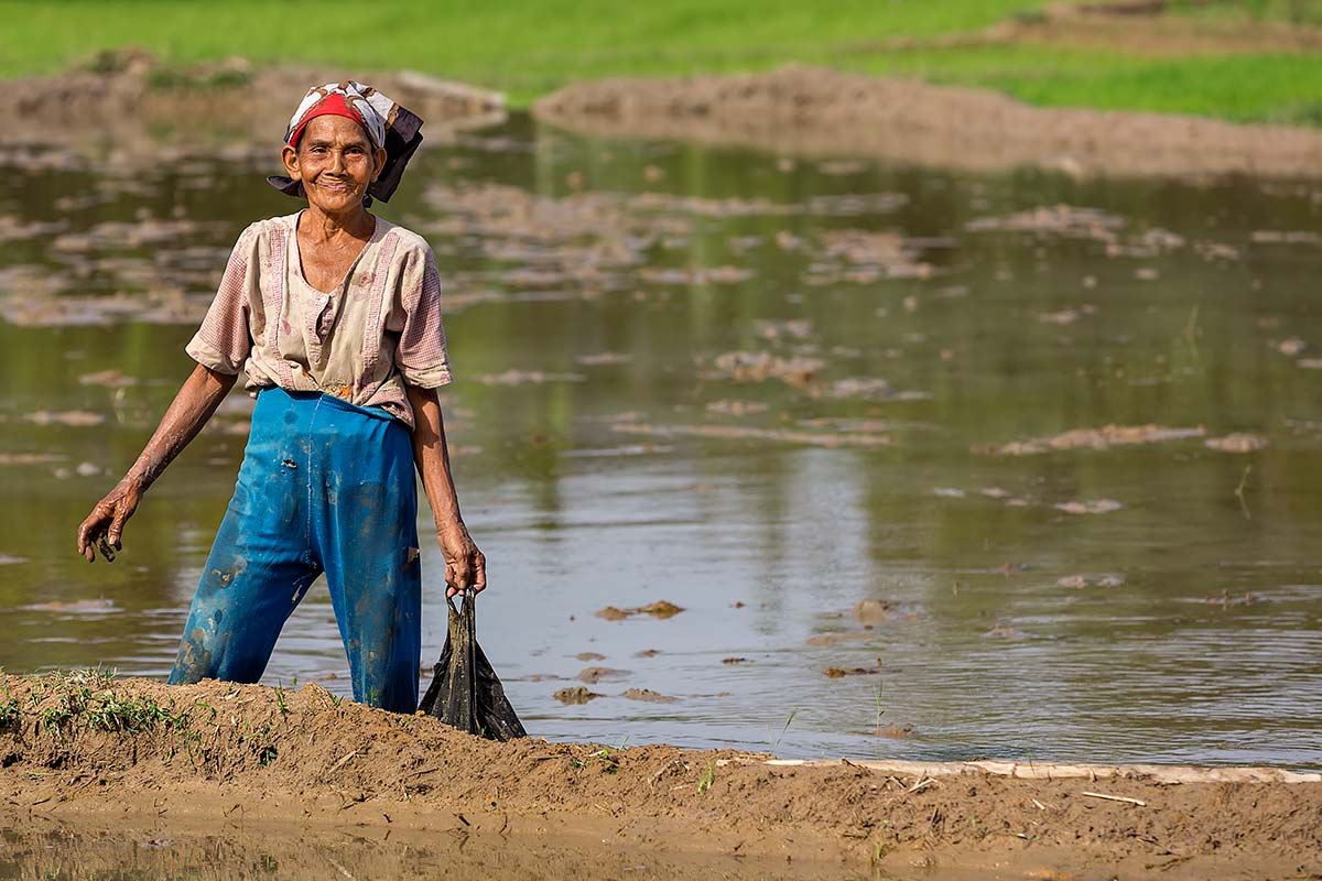 A woman glances up while working in a rice field in Sumatra.