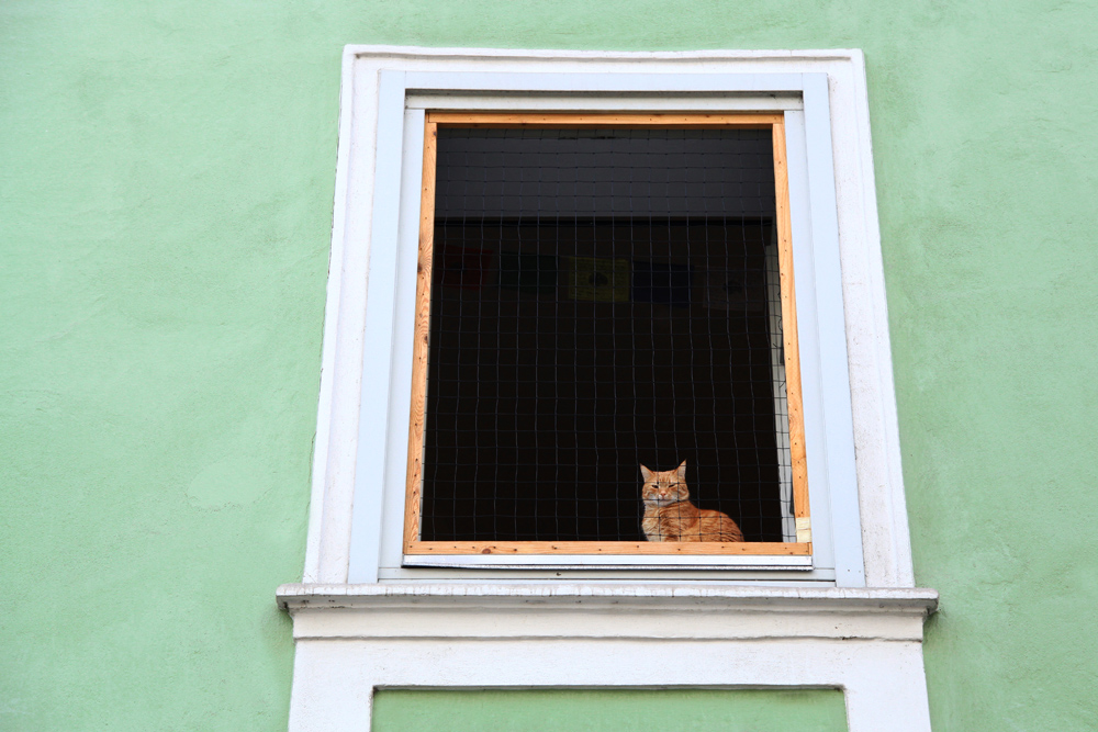 A cat in the window of a house in the Altstadt of Graz, Austria.