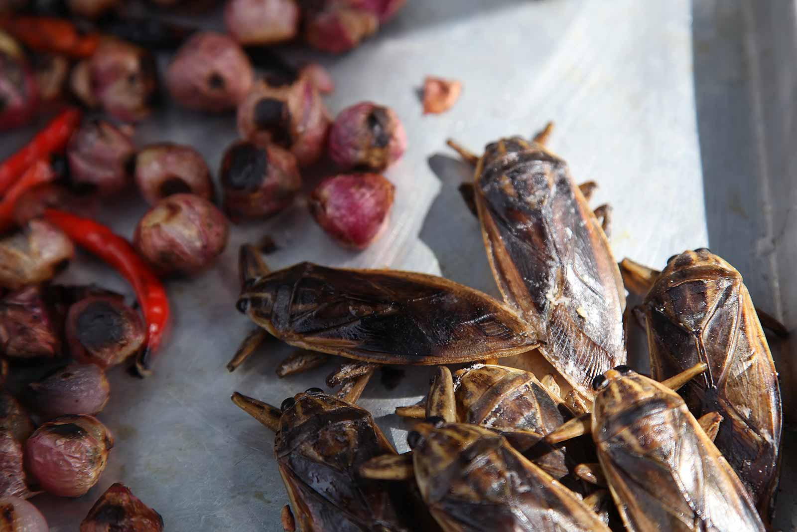 Bugs at a market in Laos.