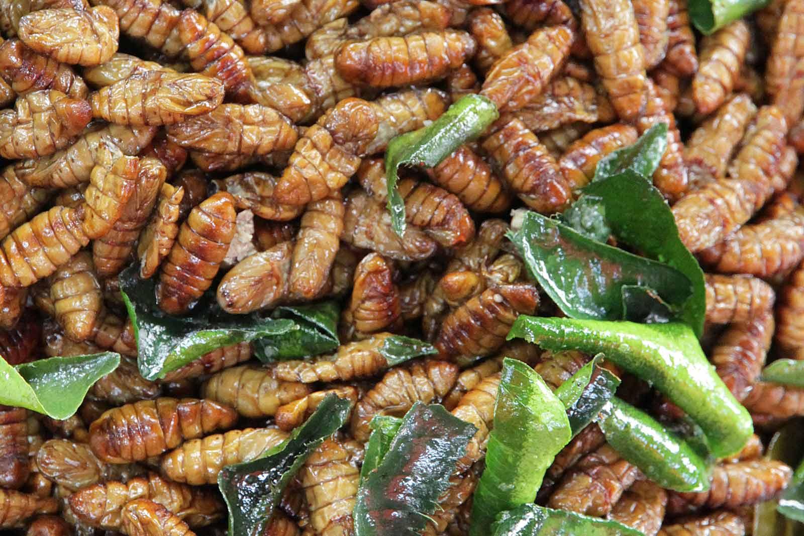 Fried maggots.
