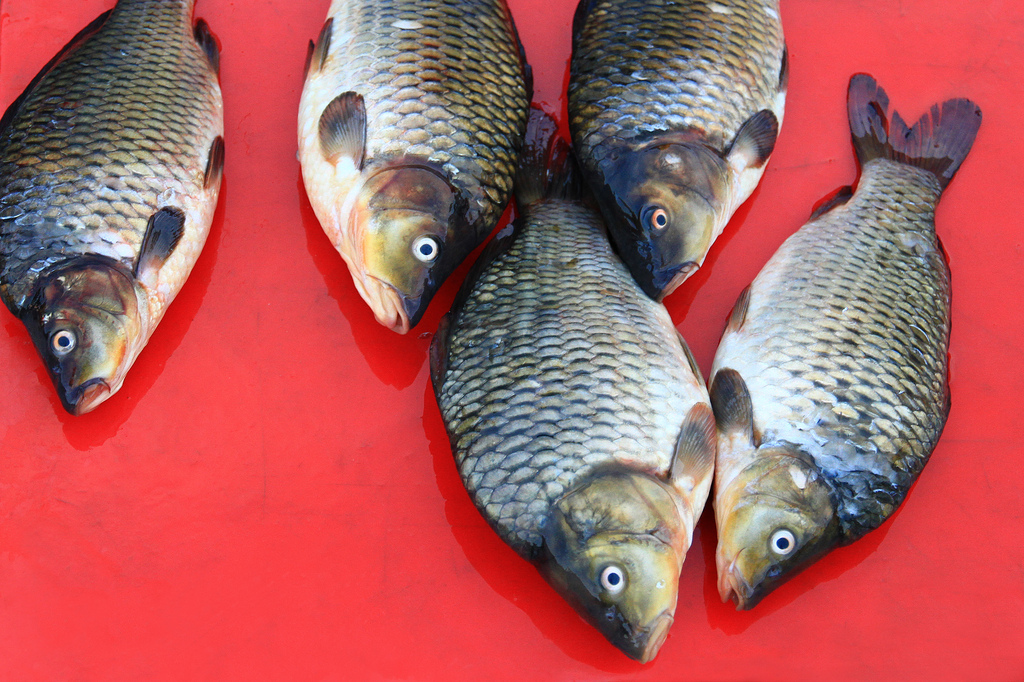 Red - Fish at a market in Gangtok, India.