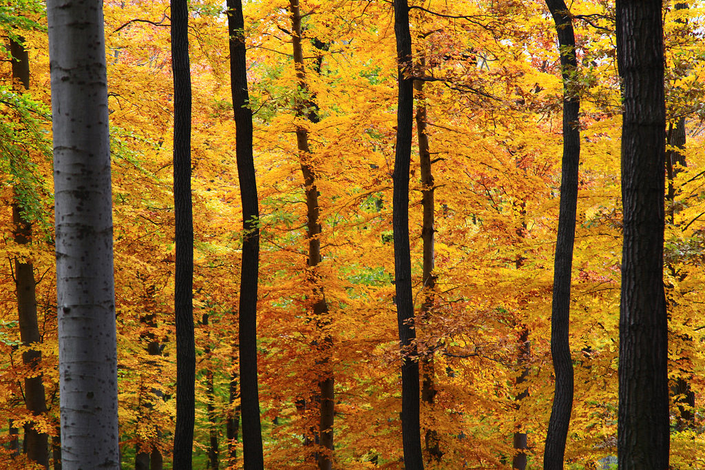 Yellow - The Viennese Woods in Austria.