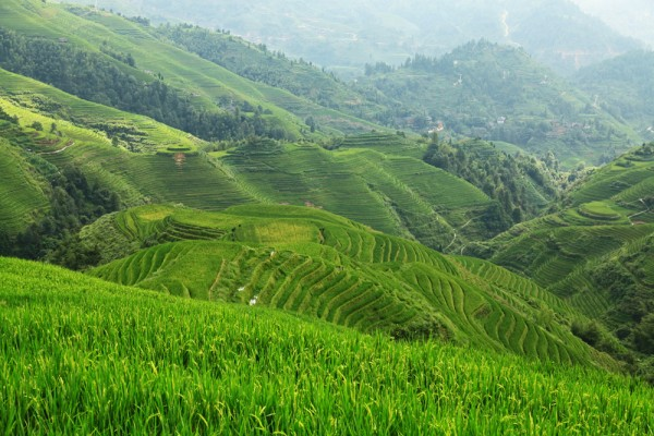 Rice Terraces from Viewpoint Nr. 1 &quot; Music for Paradise&quot;