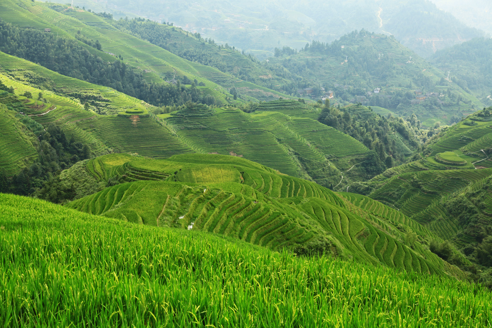 """Rice Terraces from Viewpoint Nr. 1 """" Music for Paradise"""""""