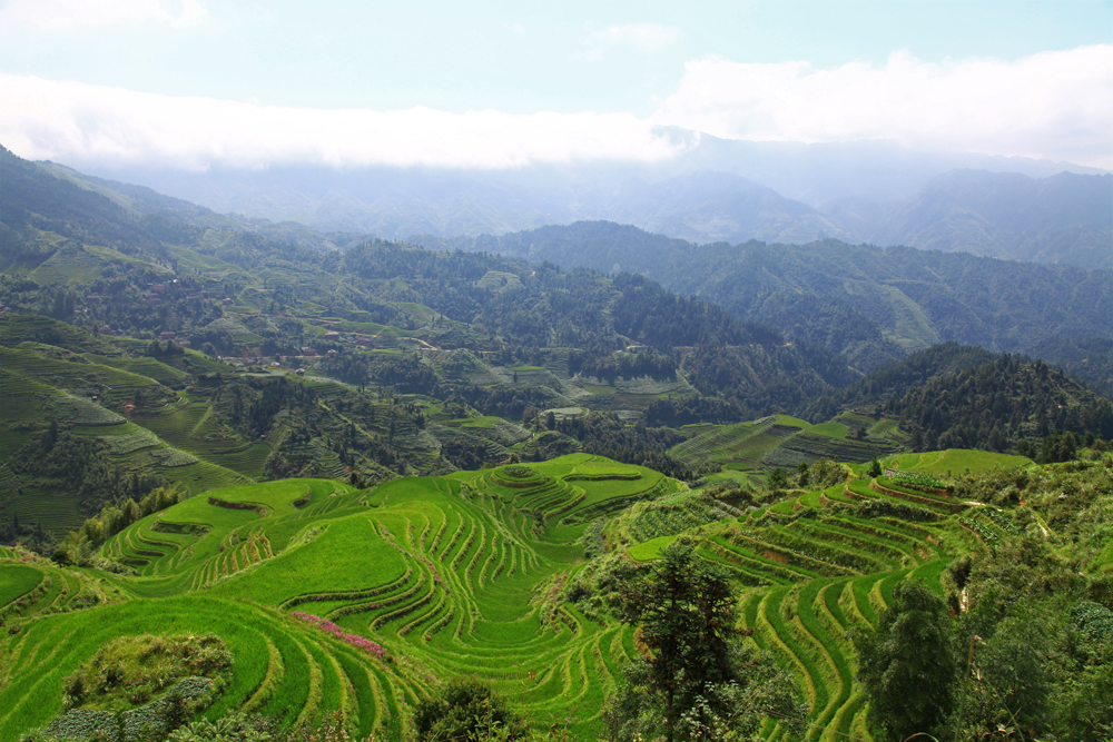 The famouse view of the Dragon's Backbone Rice Terraces from viewpoint Nr. 3.