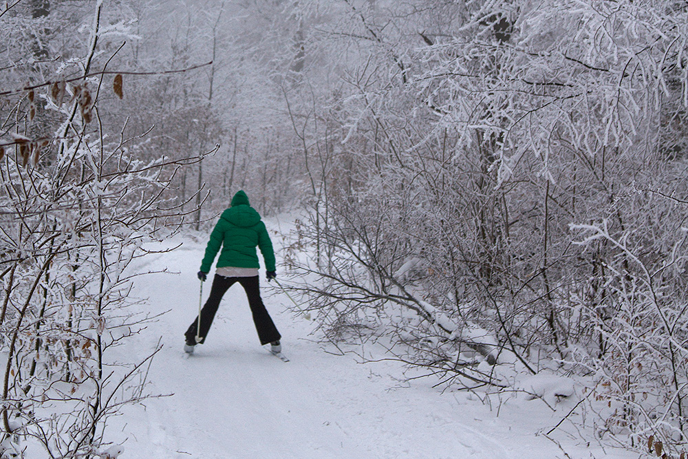 Cross-Country-Skiing in the Viennese Woods, Austria.