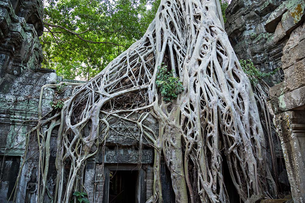 Ta Prohm temple in Angkor Wat, Cambodia.
