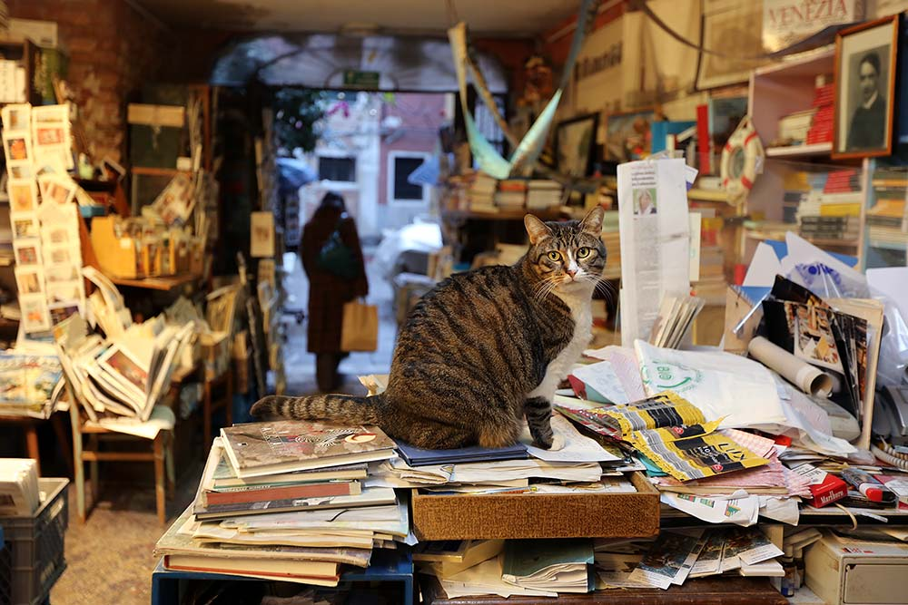 Libreria Acqua Alta in Venice, Italy.