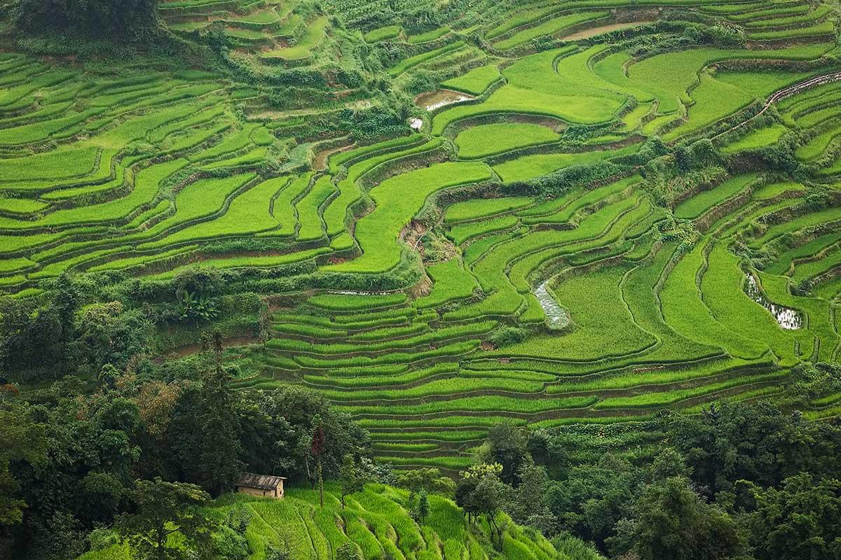 Honghe Hani Rice Terraces in Yunnan, China.