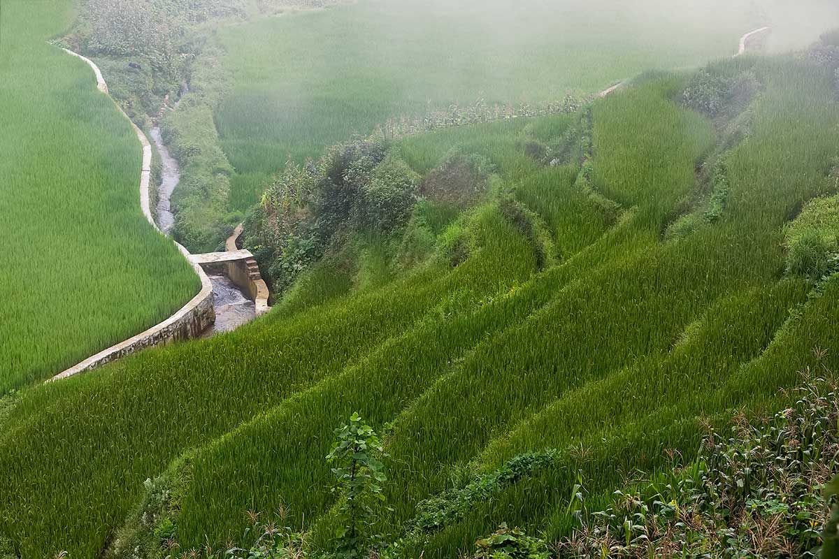honghe hani rice terraces The unesco world heritage honghe hani rice terraces have been around for more then 1,300 years and cover nearly 65 square miles plan to visit between april and october when the fields will.