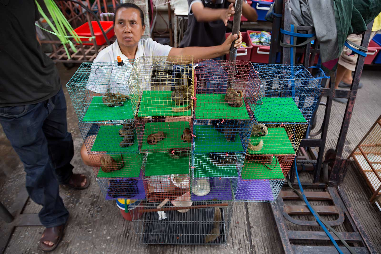 chatuchak-market-animal-section-bangkok-thailand-1