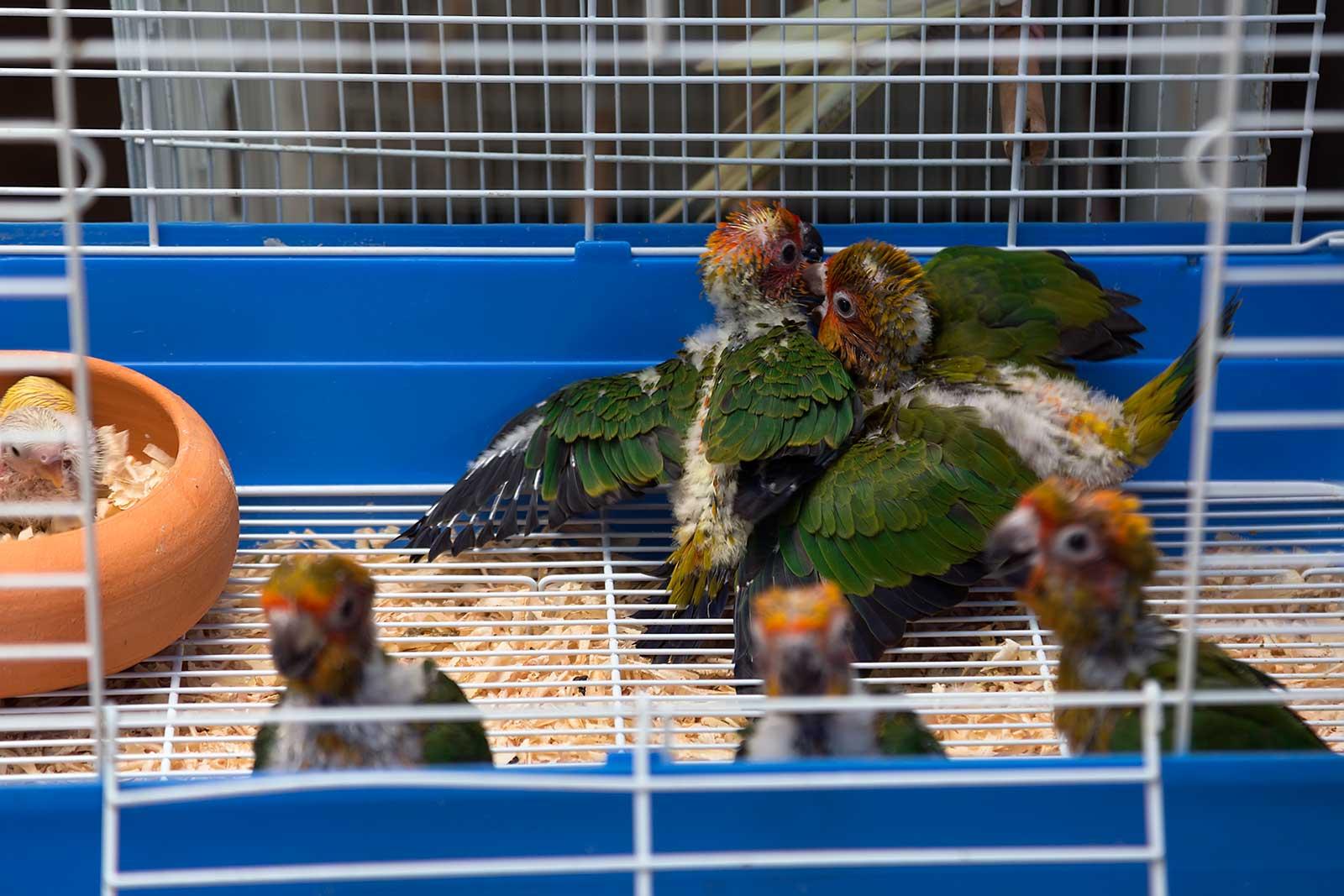 chatuchak-market-cage-pet-section-bangkok-thailand