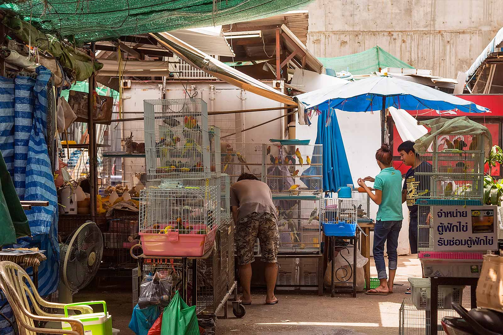 chatuchak-market-pet-section-cage