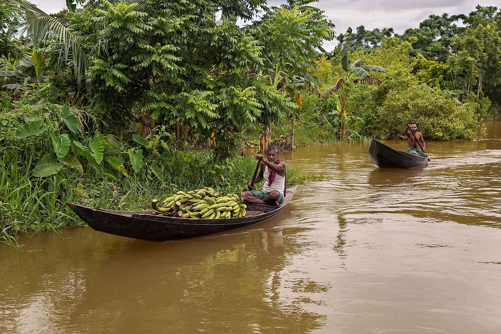 guava-plantations-boat-canal-swarupkathi-bangladesh-1