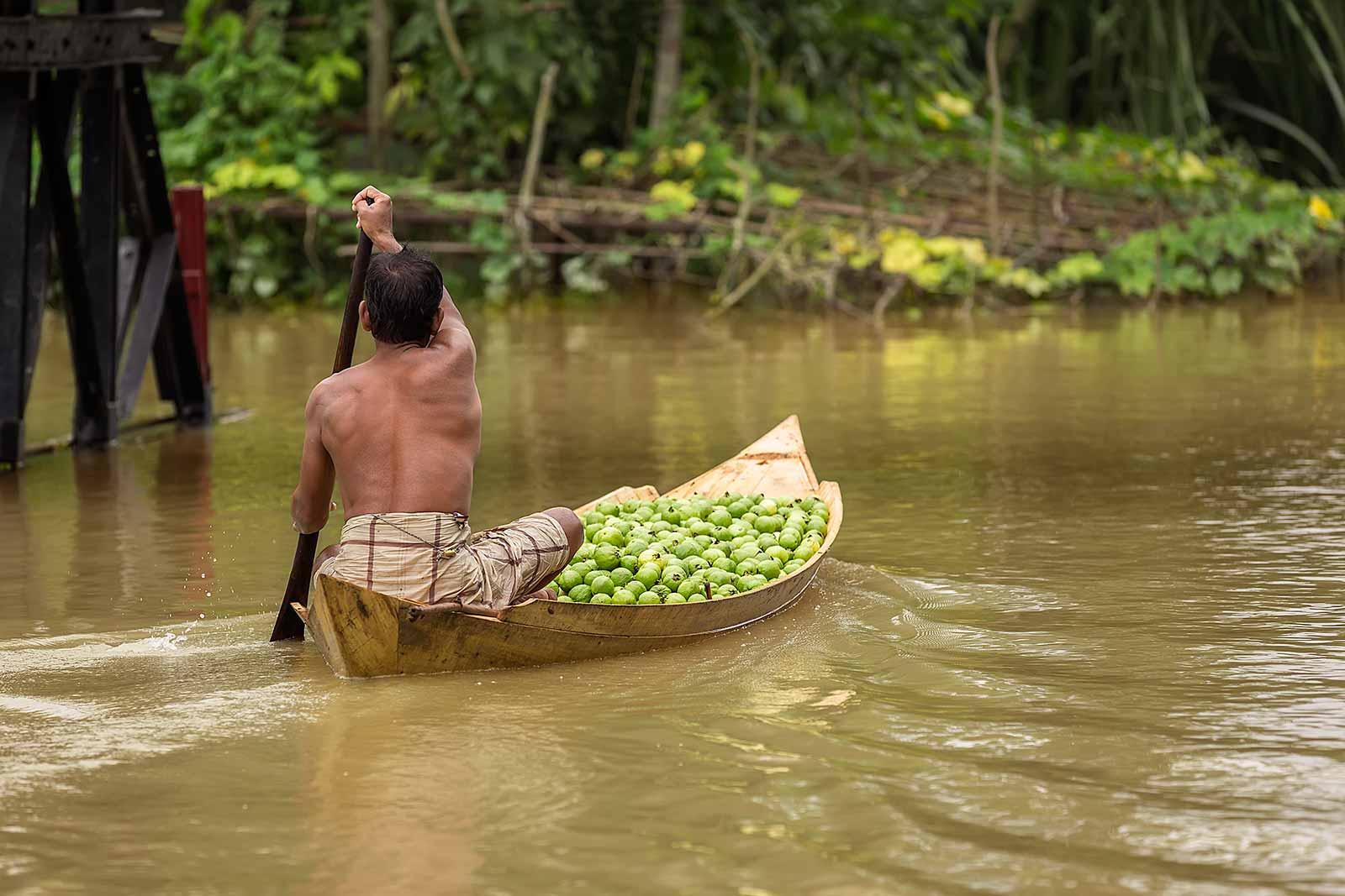 guava-plantations-boat-canal-swarupkathi-bangladesh-2