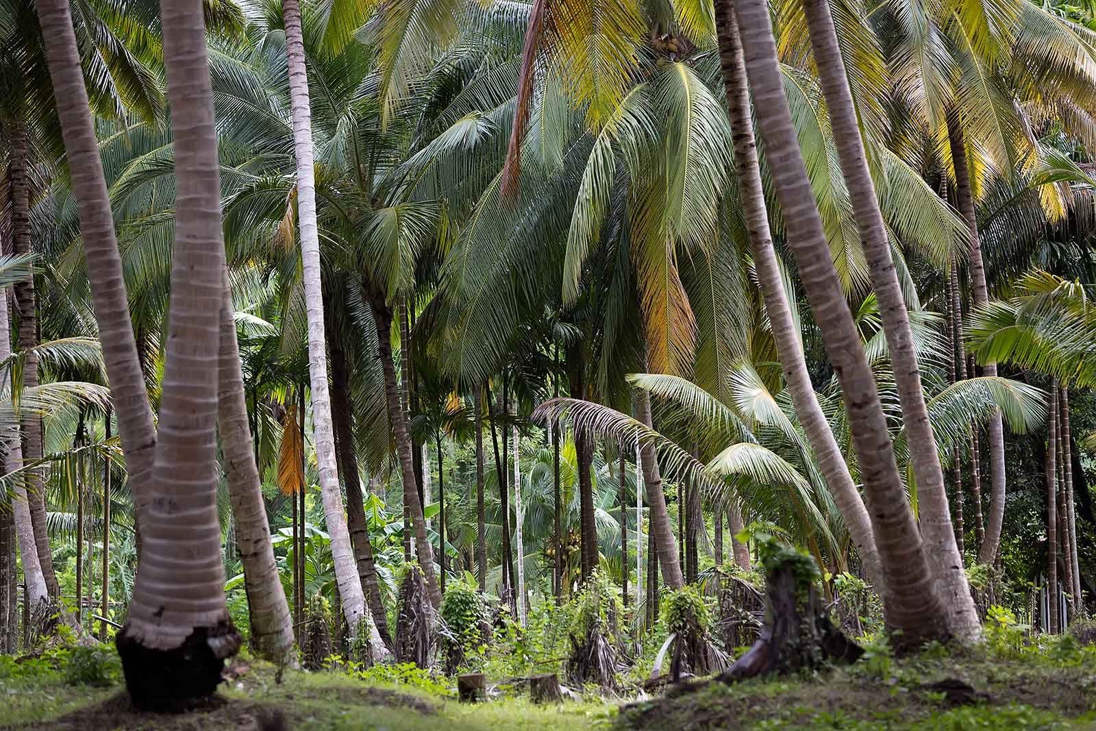 havelock-andaman-islands-palm-trees-india