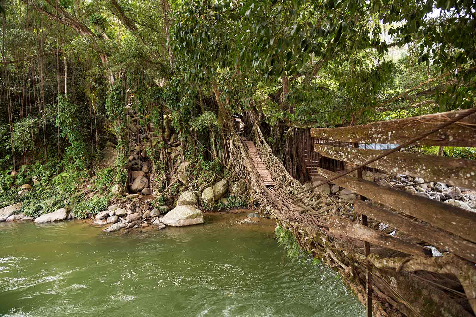 living-root-bridge-sumatra-padang-indonesia-1
