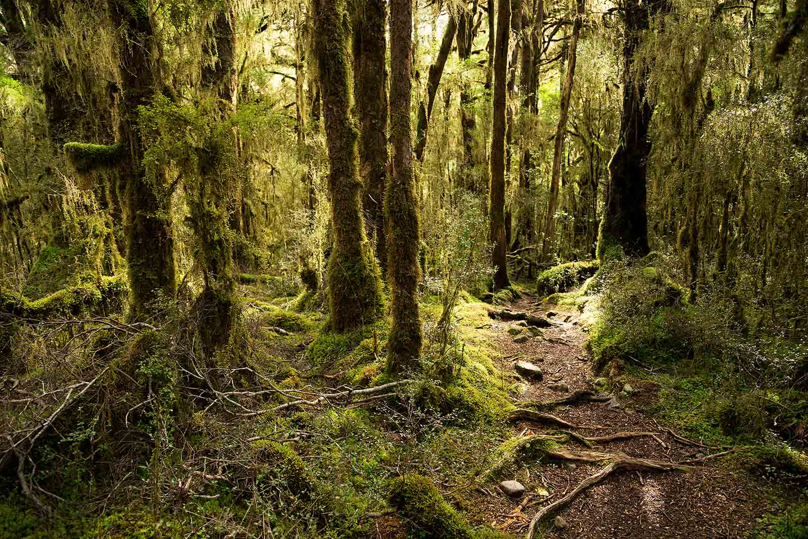 milford-track-day-1-new-zealand
