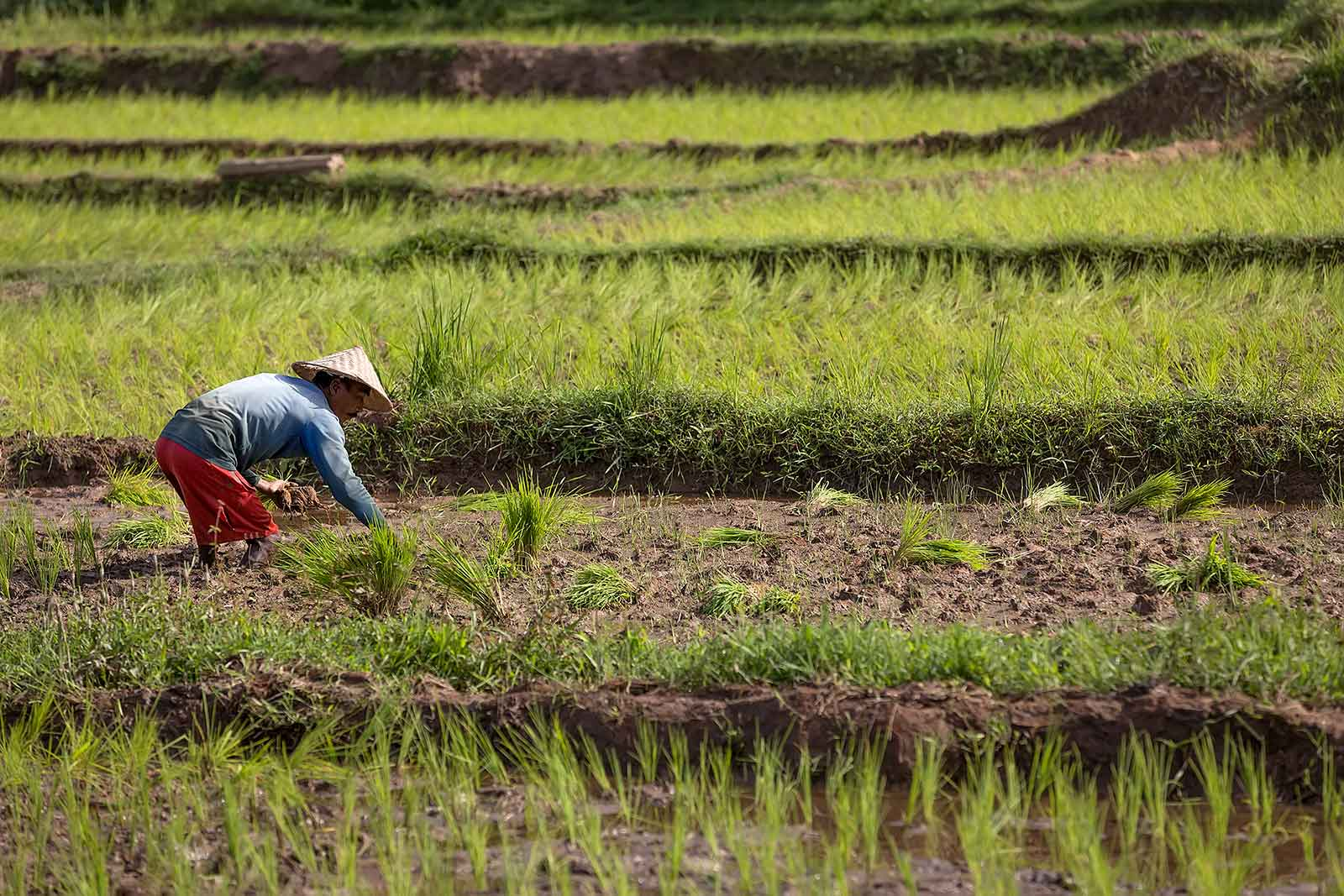 rice-fields-sumatra-indonesia-working-man