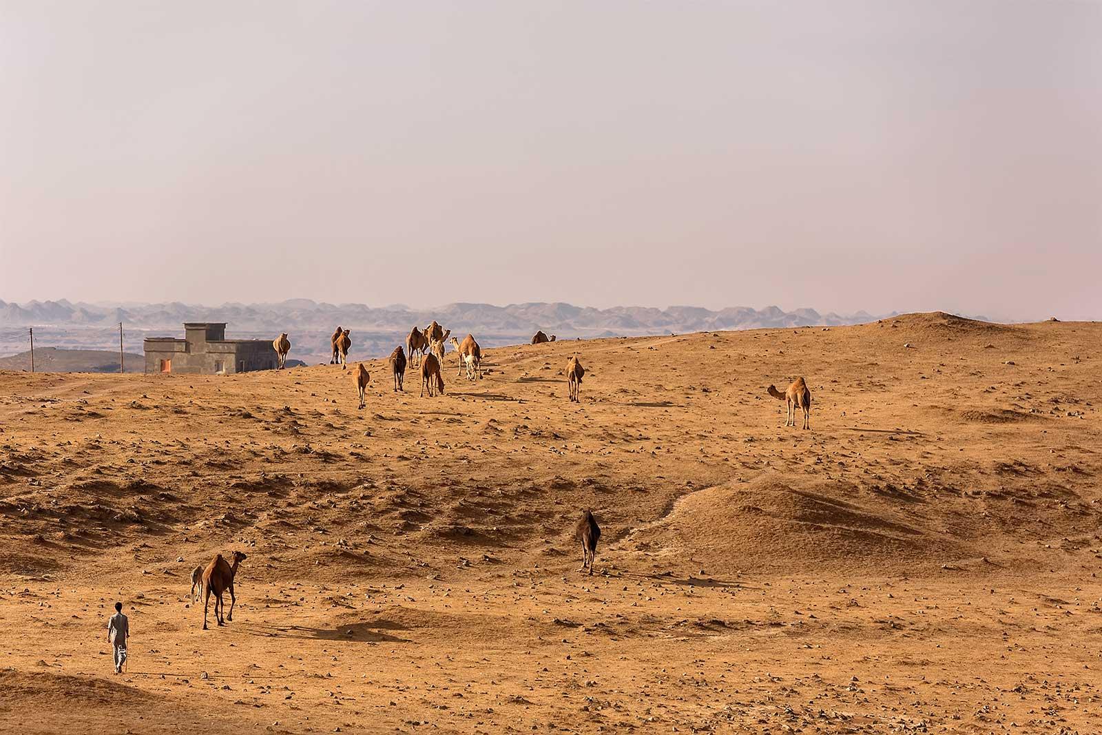 thumrait-camel-herder-oman