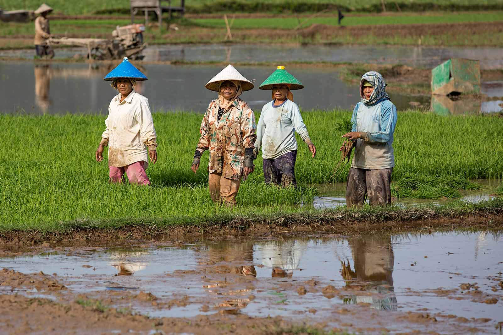 women-working-in-rice-fields-west-sumatra-indonesia