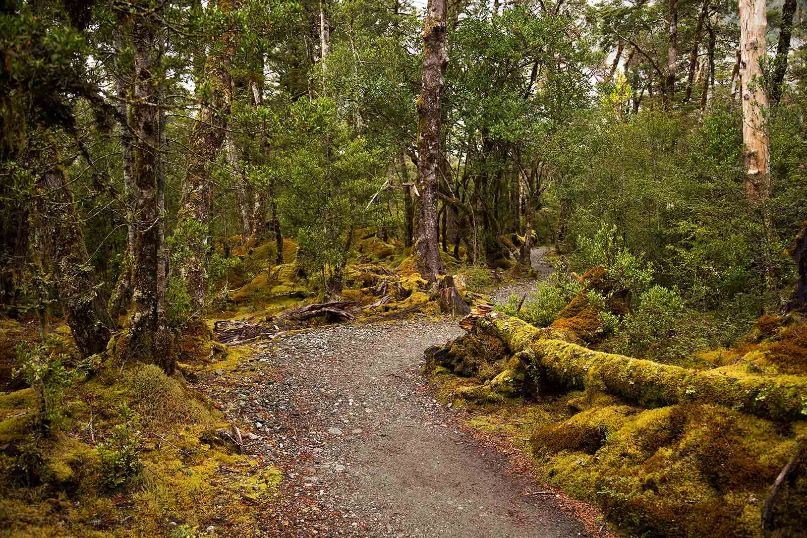 milford-track-jungle-walk-new-zealand-1